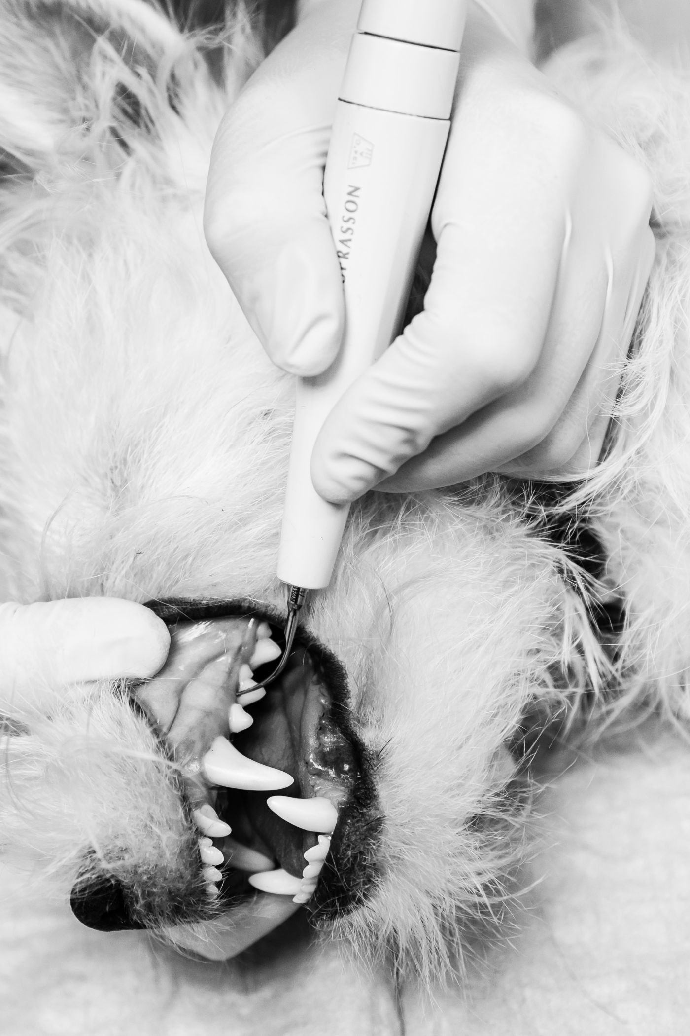 Grau karies zahn Karies behandeln